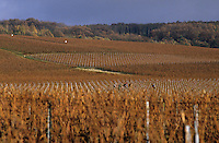 Europe/France/Champagne-Ardenne/51/Marne/Env Bouzy : Vignoble champenois