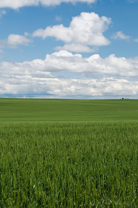 green grain fields with dramatic summer sky south of Glasgow