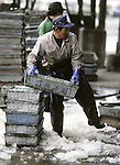 A crewman unloads fish caught in the Strait of Tsugaru in the port city of  Omma, on the Northern most tip of Honshu, Japan. (Jim Bryant Photo) .