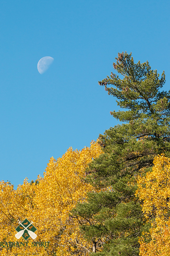 &quot;Reaching for the Moon&quot;<br />
