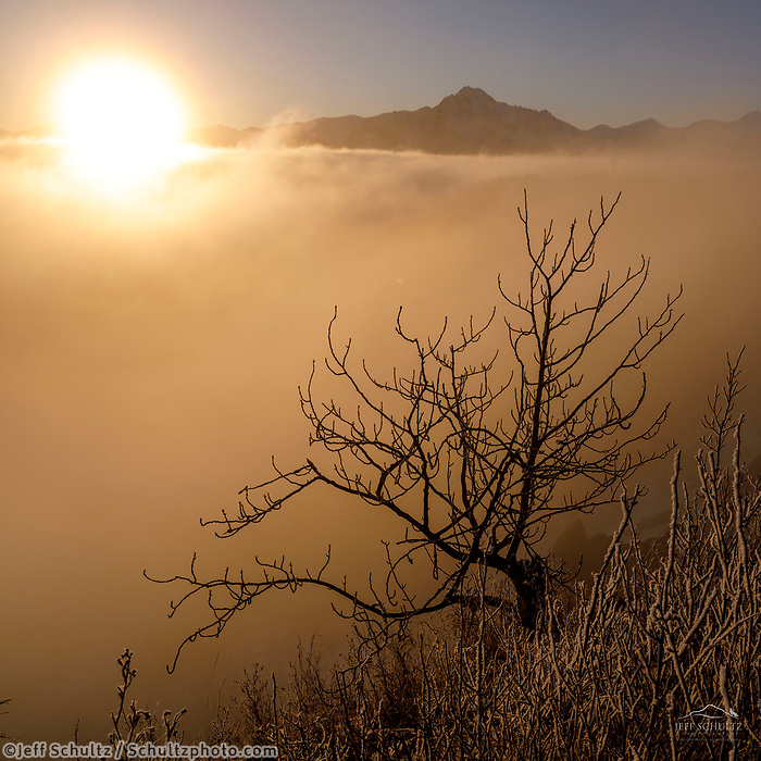 Winter landscape of frost covered bushes and grasses as the sun rises over the fog in the Matanuska Valley near Palmer, Alaska. Chugach Mountains  Southcentral Alaska<br /> <br /> Photo by Jeff Schultz/SchultzPhoto.com  (C) 2019  ALL RIGHTS RESERVED