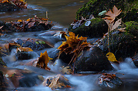 Autumn Leaves, Merced River