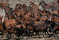 Hundreds of wild horses run through the dry Nevada desert in the Jackson Mountains.