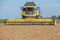 Harvesting vining pea seed with a New Holland CR9080 combine - Lincolnshire, July