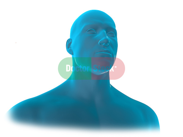 Male Head and Neck; this 3d medical image features a view of a male's head and neck.