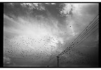 Birds over Birkenau, Poland