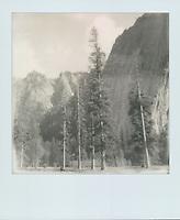 El Capitan Meadow, 2019, Yosemite, CA  Polaroid taken with SX-70