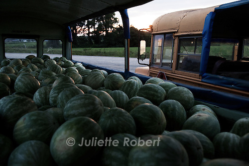 Les anciens bus scolaires qui servent a la recolte des pasteques, en Caroline du Nord, juillet 2012. The old school buses used for the watermelon harvests in North Carolina, july 2012.