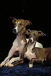 Italian Greyhound Shopping cart has 3 Tabs:<br />