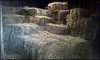 BNPS.co.uk (01202 558833)<br /> Pic: JohnTressider/BNPS<br /> <br /> The giant haystack in the barn...<br /> <br /> Married John Tressider got the needle when he lost his wedding ring in a giant haystack - only to find it two weeks later using a metal detector.<br /> <br /> John, 68, from East Budleigh, Devon, had been helping out on his auntie's farm and was moving 200 large bales of straw when he noticed his gold Celtic band had come off his finger.<br /> <br /> After two separate 'needle in a haystack' searches for it he borrowed a friend's metal detector and finally found it close to the bottom of the 20ft tall stack.