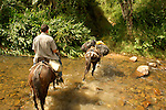 Travelers on mules cross a mountain stream in Honduras' Pico Bonito National Park.