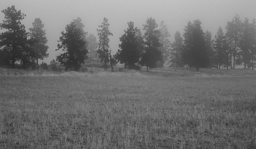 Fog flows through the trees near a remote farm in the Palouse of Eastern Washington State.