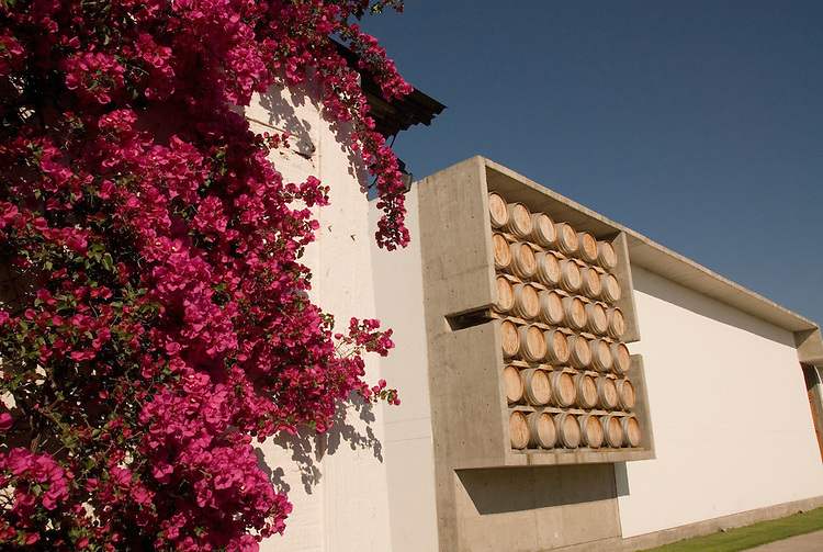 Chile Wine Country: Bougainvillea and barrels outside Undurraga Winery, Vina Undurraga, near Santiago..Photo #: ch435-32838..Photo copyright Lee Foster, 510-549-2202, www.fostertravel.com, lee@fostertravel.com.