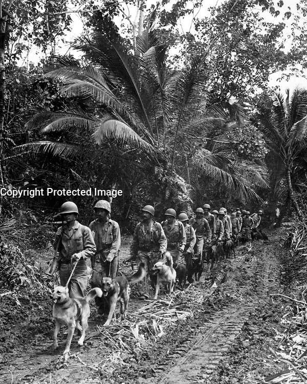 U.S. Marine &quot;Raiders&quot; and their dogs, which are used for scouting and running messages, starting off for the jungle front lines on Bougainville.  Ca.  November/December 1943.  T.Sgt. J. Sarno.  (Marine Corps)<br /> Exact Date Shot Unknown<br /> NARA FILE #:  127-GR-84-68407<br /> WAR &amp; CONFLICT BOOK #:  870