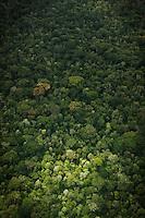 Aeriel view of jungle.