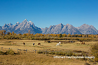 67545-09606 Horses and Grand Teton Mountain Range in fall, Grand Teton National Park, WY