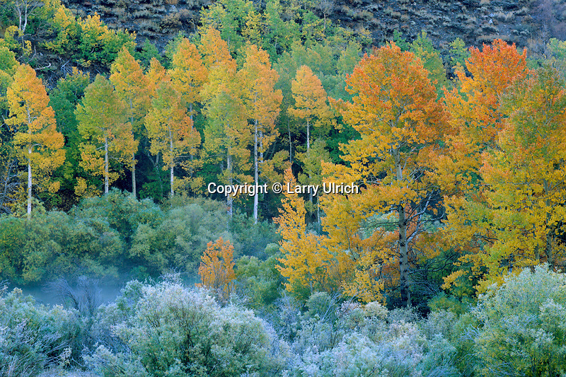Aspens and willows along Rush Creek<br />