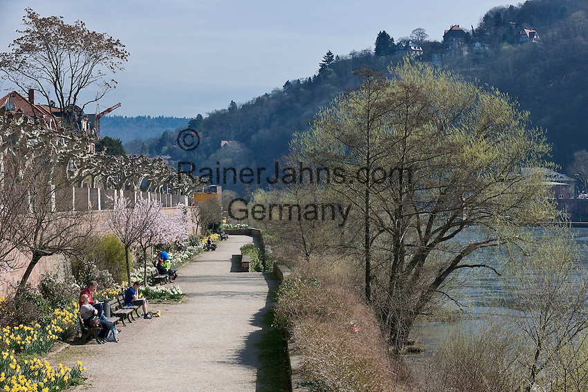Germany, Baden-Wuerttemberg, Heidelberg: almond blossom at the banks of river Neckar opposite to old town | Deutschland, Baden-Wuerttemberg, Heidelberg: Mandelbluete am Ufer des Neckars gegenueber der Altstadt