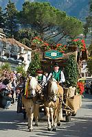 Italien, Suedtirol, Meran: Trachtenumzug waehrend des Traubenfestivals. Trachtengruppe der Suedtiroler Speck Genossenschaft   Italy, South-Tyrol, Alto Adige, Merano: parade in traditional costumes during wine festival, horse-drawn carriage
