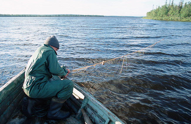 Sasha, a Sami man, checking his fishing nets near Lovozero (Strong Lake). Kola Peninsula, NW Russia