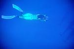 Delphine Legay Filming Dolphins Uw