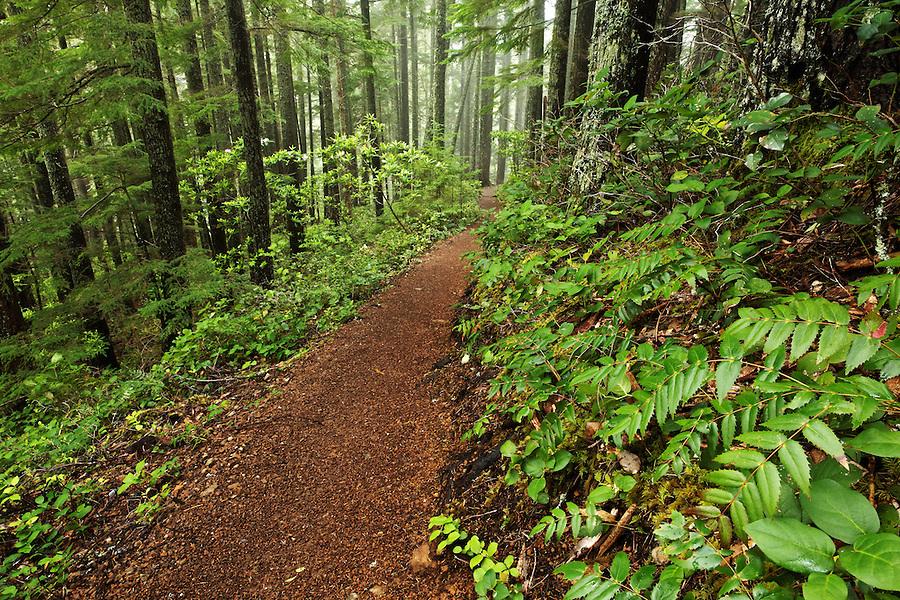 Mount Walker Trail through forest, Quilcene, Jefferson County, Washington, USA