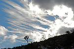 winter sky in Joshua Tree National Park