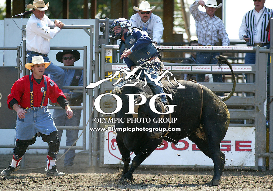 30 Aug 2009:  Corey Navarre riding the bull Beetle scored a 85 on his ride during the Extreme Bulls tour stop in Bremerton, Washington.  Bremerton was the last stop in the Wrangler Million Dollar Pro Rodeo Silver Tour for 2009.