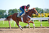 I'll Have Another and field prep for the Belmont Stakes - 6/3/12