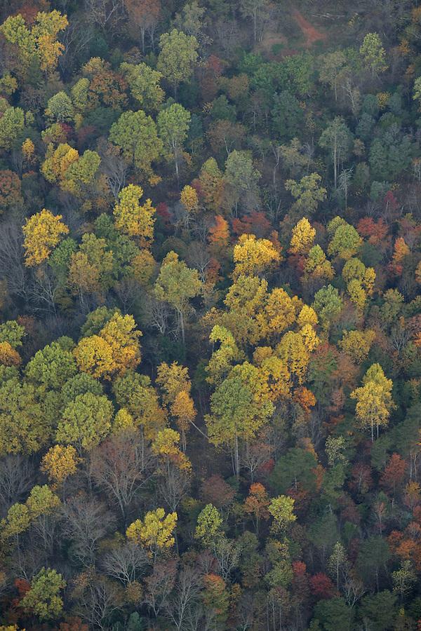 fall leaves, colors, tree