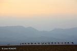 Des centaines d'Afars - convoyant des milliers de dromadaires, d'ânes et de mules - suivent les pistes des caravanes de sel reliant le lac Asalé aux marchés des hauts plateaux éthiopiens.