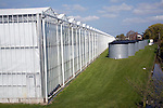 Intensive horticulture in greenhouses, Maarel Orchids, Maasdijk, De Lier, Netherlands, Netherlands