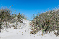 Dune path to the beach, West Beach, Westport, Massachusetts, USA.