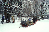 maple syrup, gathering sap, winter, Cabot, VT, Vermont, People gathering sap on Carpenter Farm using horse and sleigh at sugaring time in early spring in Cabot.