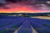 Tom Mackie, LANDSCAPES, LANDSCHAFTEN, PAISAJES, photos,+Europa, Europe, European, France, Plateau de Valensole, Provence, Tom Mackie, blue, dramatic outdoors, french, horizontal, ho+rizontals, lavender, mood, moody, red, scenic, sunrise, sunrises, sunset, sunsets, time ofday,Europa, Europe, European, Franc+e, Plateau de Valensole, Provence, Tom Mackie, blue, dramatic outdoors, french, horizontal, horizontals, lavender, mood, mood+y, red, scenic, sunrise, sunrises, sunset, sunsets, time ofday+,GBTM180307-1,#l#, EVERYDAY