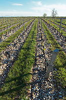 gravelly soil grass removed around vines chateau belgrave haut medoc bordeaux france