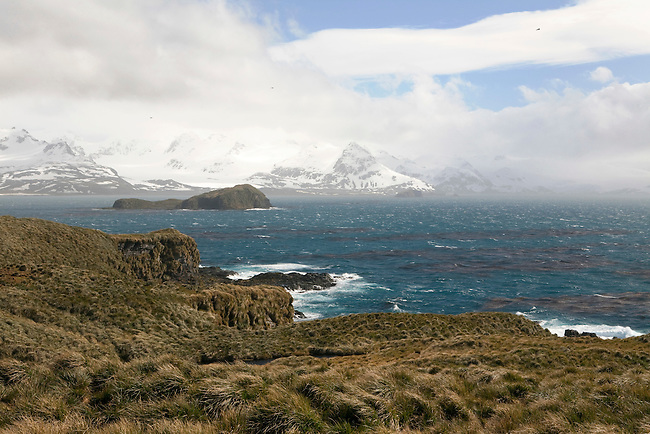 Mountains seen across the Bay of Isles and the Tussock Grass of Prion Island. South Georgia