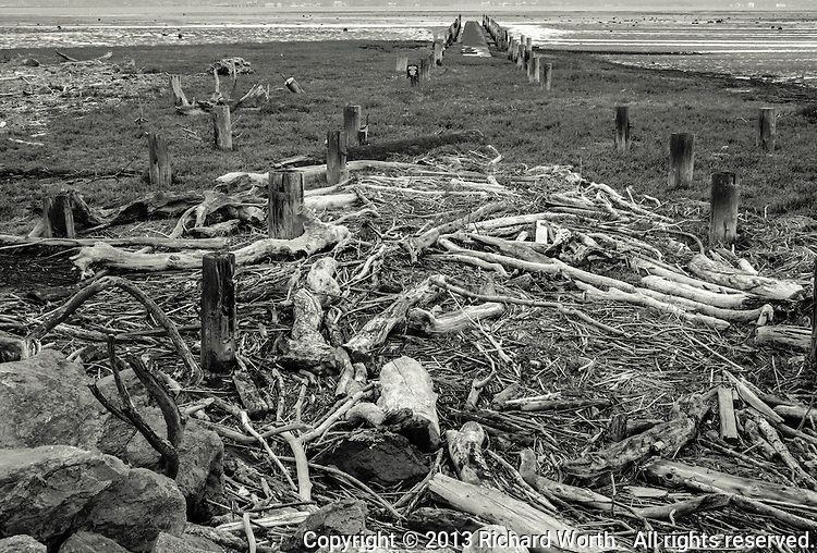On the shores of San Francisco Bay, next to a waste water treatment plant, a tangle of driftwood lies on shore near abandoned pilings, now part of a resource protection area.  Natural chaos amid manmade order - rendered in black and white.