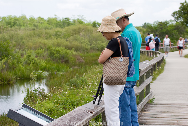 The Anhinga Trail is a great trail to view wildlife at close range.
