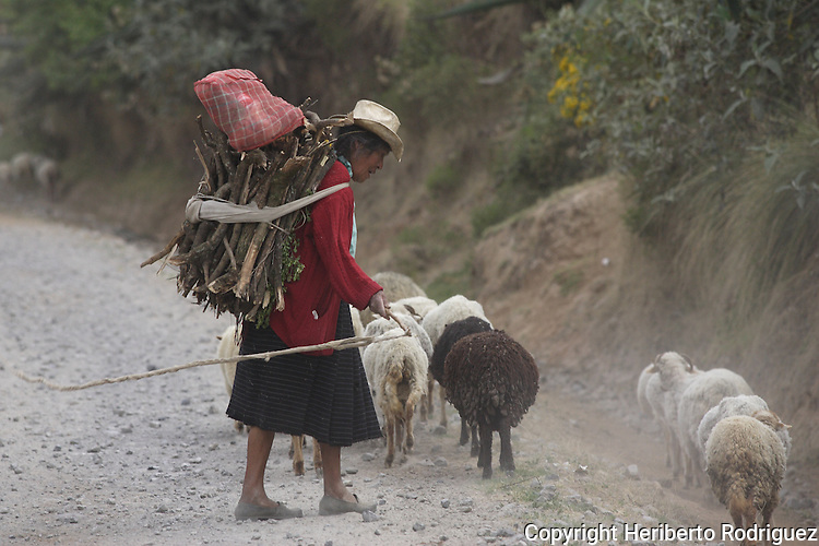 An old Mexican Native Nahnuh heads her sheeps in a rural road in Jiquipilco El Viejo, in western Mexico state, April 20, 2005. Photo by Heriberto Rodriguez
