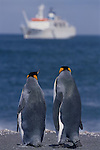 King Penguins Watching a Cruise Ship;  South Georgia and the South Sandwich Islands