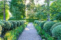 France, Loir-et-Cher (41), Cheverny, château de Cheverny, le Jardin des apprentis, haie taillée en  boules de houx panachés et saules à feuilles de romarin
