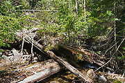Decaying sled bridge along an abandoned sled road high on the side of Mount Bond in the Pemigewasset Wilderness of Lincoln, New Hampshire. This was part of the East Branch & Lincoln Railroad which was a  logging railroad in operation from 1893-1948.