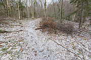 March 2012 - Cut brush dropped on the side of the Mt Tecumseh Trail in the New Hampshire White Mountains. In 2011, Tropical Storm Irene washed out part of the trail, and this is the rerouted section. Proper protocol is to pick up all branches and debris and scatter them off the trail with the cut ends facing into the woods away from the trail. Update 2017: After 5-6 years, this pile of brush has finally been picked up and properly scattered off the trail per basic trail maintenance guidelines.
