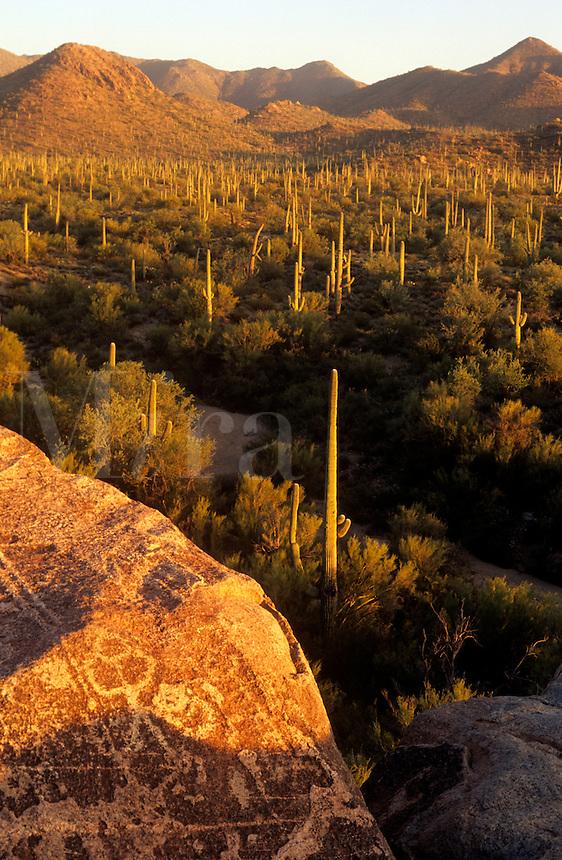 Petroglyphs at Saguaro National Monument Tucson Arizona