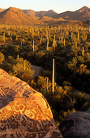 Petroglyphs at Saguaro National Monument Tucson Arizona