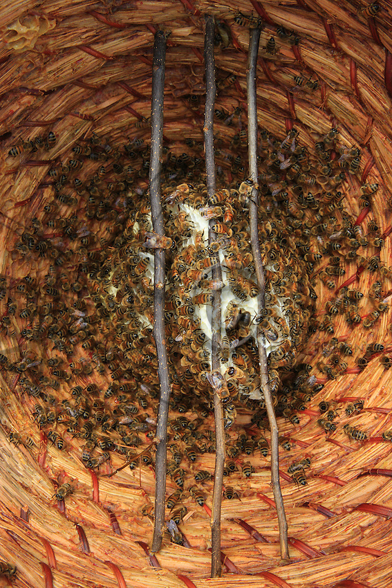 A circular basket as a hive.