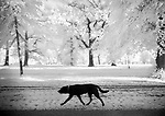 A black dog walking in a park