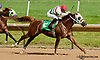 Brute winning at Delaware Park on 7/4/13
