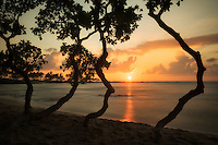 Sunset through trees on the Kohala Coast. Hawaii, The Big Island.